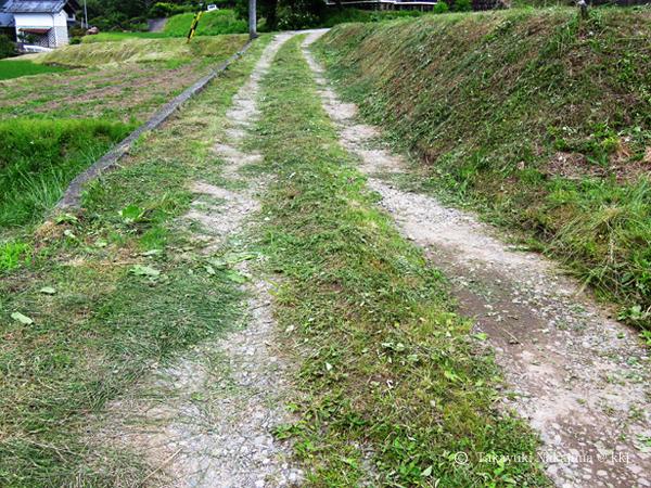 写真5 雑草はできるだけ背丈の低い状態に保つ