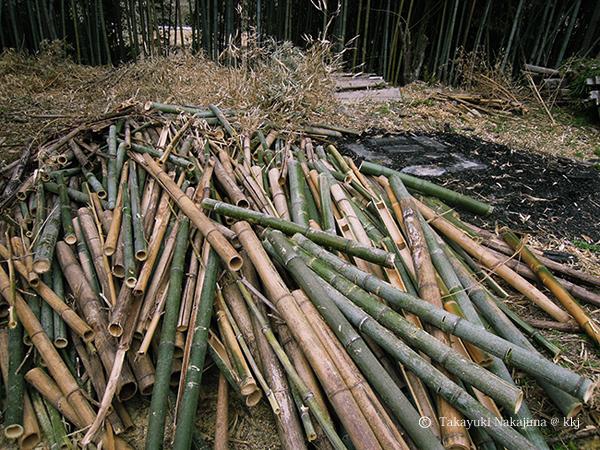 伐採して枝葉を落とした竹の山