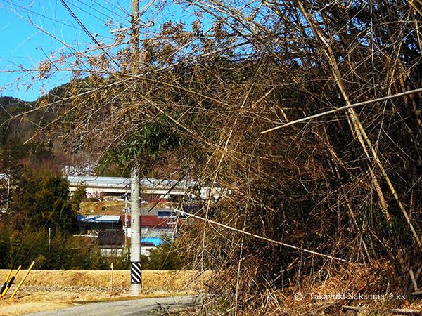 道路をふさぐ折れた竹